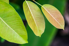 Leaves. Leaf green leaves background texture plant summer spring nature pattern closeup natural macro organic life environment growth clean environmental small Stock Photo