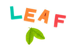 Leaves and leaf word Stock Photo