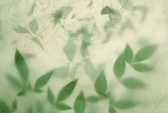 Leaves on leaves Stock Image