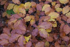 Leaves. In autumn Royalty Free Stock Photo
