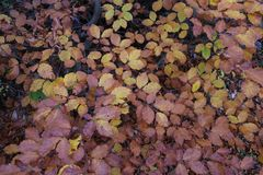 Leaves. In autumn Stock Images