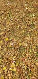 Leaves. Ground, texture, yellow, originally, fall, colors, wind royalty free stock images
