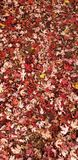 Leaves. Ground, texture, yellow, originally, fall, colors, wind stock image