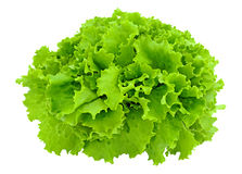 Leaves of lettuce. On the white background stock image