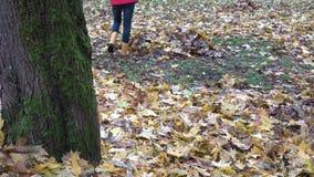 Leaves lie on ground under tree and gardener woman rake foliage. Tilt down. 4K. Fallen colorful leaves lie on ground under maple tree and gardener woman rake stock video