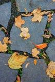 leaves ligger den stenlade vägen Royaltyfri Bild