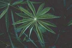 Leaves like a star. Green leaves in the garden. Vintage look. Green and dark background royalty free stock image