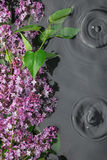 Leaves and lilac flowers in the water in the rain Royalty Free Stock Image