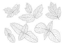 Leaves line and Single leaf on white background vector illustration