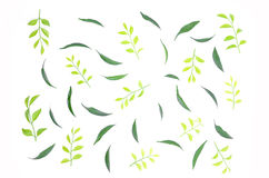 The leaves are lined together beautifully. Royalty Free Stock Photography