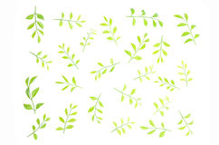 The leaves are lined together beautifully. Stock Photography