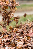 Leaves litter Stock Image