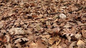 Leaves litter stock video