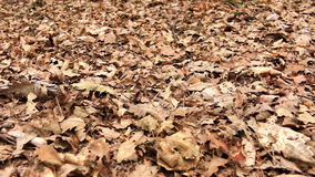 Leaves litter stock footage