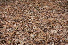 Leaves littering forest floor Royalty Free Stock Photos