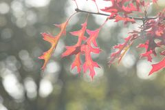 Leaves in lot of different colors in forrest in Vierhouten, the netherlands royalty free stock photos