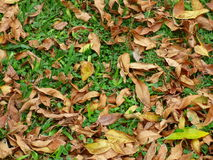 Leaves lying on the ground Stock Images