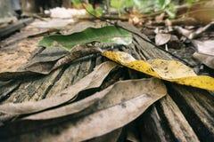Leaves Lying on Top of Wood Board. Dry leaves lying on top of old broken wood board Stock Images