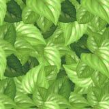 leaves mönsan seamless Royaltyfri Foto