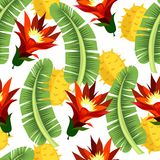 leaves mönsan tropiskt Royaltyfri Fotografi