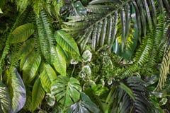leaves mönsan tropiskt Exotiska växter för grönt blad som är sömlösa på en mörk djungelbakgrund Konstnärlig fotocollage för royaltyfri bild