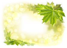 Leaves maple. Frame of maple leaves in bright sunlight stock illustration