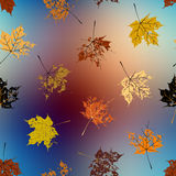 Leaves of maple on blurred background, autumn pattern. Royalty Free Stock Photos