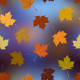 Leaves of maple on blurred background, autumn. Seamless background pattern. Leaves of maple on blurred background, autumn pattern Royalty Free Stock Photos