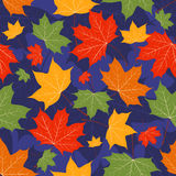Leaves of a maple on dark blue. Autumn leaves of a maple on dark blue. Seamless pattern. Vector background Stock Images