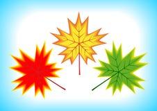 leaves maple three Стоковые Изображения