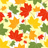 Leaves of a maple on yellow. Autumn leaves of a maple on yellow. Seamless pattern. Vector background Stock Photos