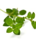 Leaves of marjoram herb Stock Images