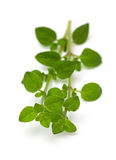 Leaves of marjoram herb Stock Photography