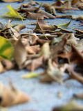 Leaves Me Alone. Blurry artistic leaves fall spring Royalty Free Stock Image