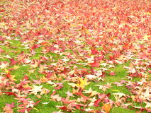 Leaves on a meadow. Fallen leaves on a meadow Royalty Free Stock Image