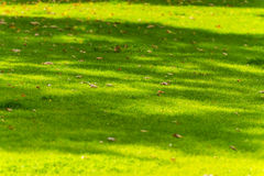 Leaves on meadow Stock Photos