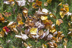 Leaves at the meadow Royalty Free Stock Photo