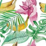 Watercolor seamless pattern of detailed palm leaves, monstera, banana fruit,. Leaves of Medinilla and flower on a pink background stock illustration