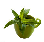 Leaves of mint in the cup. Green mint in the green cup on the white background Stock Photo