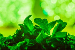 Leaves of mint on green background Royalty Free Stock Photos