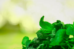 Leaves of mint on green background Royalty Free Stock Image