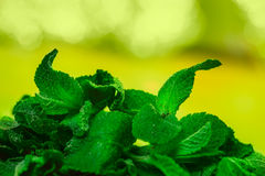 Leaves of mint on green background Stock Images