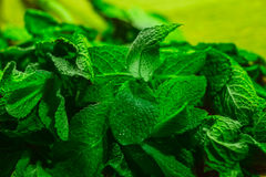 Leaves of mint on green background Royalty Free Stock Photo