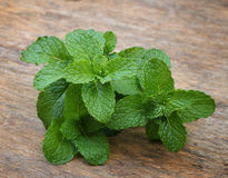 Leaves of mint with label. Leaves of mint on table  ,fresh , herb Royalty Free Stock Photo