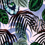 Leaves monstera palm pattern Stock Photography