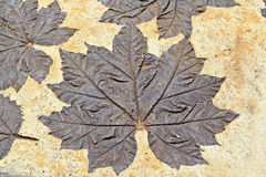 Leaves on mortar Royalty Free Stock Photo