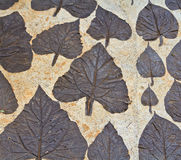 Leaves on mortar Stock Photos
