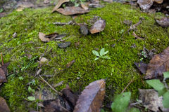 Leaves, moss and vegetation Royalty Free Stock Images