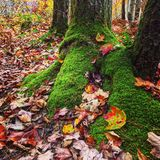 Leaves mossy Royalty Free Stock Photography