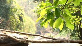 Leaves moving in sunlight in Vachiratarn waterfall, doi inthanon mountain chiangmai Thailand.  stock video footage